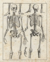 Human skeleton, skull, bones 20042001643| 写真素材・ストックフォト・画像・イラスト素材|アマナイメージズ