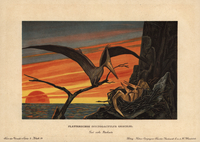 Pteranodon, Nyctodactylus gracilis