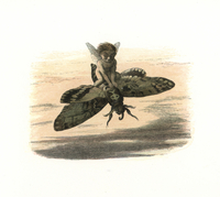 Elf riding a death's head hawkmoth