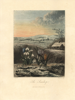 Snowdrop, Galanthus nivalis, and Crocus vernus