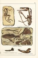 Fossil theropod, pterosaur, bird.