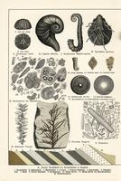 Fossil diatoms, foraminifera, ferns and mollusks. 20042002384| 写真素材・ストックフォト・画像・イラスト素材|アマナイメージズ