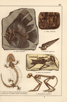 Fossil fish, shell, bird and monkey.
