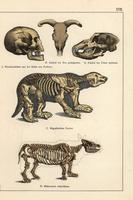 Fossil man, auroch, megatherium, rhino.