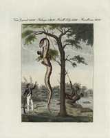 Slaves skinning a snake in Surinam.