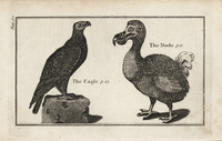 Dodo, Raphus cucullatus, and eagle.