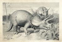 Triceratops prorsus.