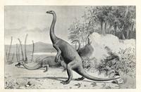 Anchisaurus polyzelus, early Jurassic.