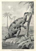 Iguanodon bernissartensis.