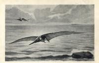Pteranodon longiceps, giant pterodactyl.