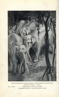 Gomphotherium, extinct elephants.