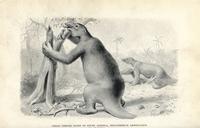 Megatherium americanum,