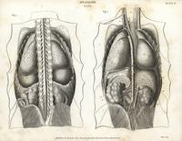 Anatomy of human internal organs.