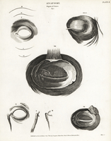 Human eye musculature, tear duct, etc.