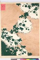 友禅図案(有職模様図案集より) 20046002209| 写真素材・ストックフォト・画像・イラスト素材|アマナイメージズ