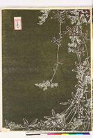 友禅図案(秋模様友禅図案集より) 20046002534| 写真素材・ストックフォト・画像・イラスト素材|アマナイメージズ