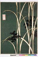 友禅図案(秋模様友禅図案集より) 20046002561| 写真素材・ストックフォト・画像・イラスト素材|アマナイメージズ
