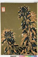 友禅図案(秋模様友禅図案集より) 20046002635| 写真素材・ストックフォト・画像・イラスト素材|アマナイメージズ
