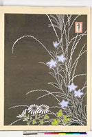 友禅図案(秋模様友禅図案集より) 20046002780| 写真素材・ストックフォト・画像・イラスト素材|アマナイメージズ
