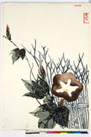 友禅図案(夏模様随意友禅図案集より) 20046004046| 写真素材・ストックフォト・画像・イラスト素材|アマナイメージズ