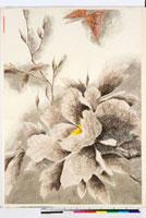 友禅図案(夏模様随意友禅図案集より) 20046004049| 写真素材・ストックフォト・画像・イラスト素材|アマナイメージズ