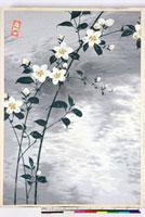 友禅図案(夏模様随意友禅図案集より) 20046004134| 写真素材・ストックフォト・画像・イラスト素材|アマナイメージズ