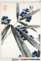 友禅図案(夏模様随意友禅図案集より) 20046004186| 写真素材・ストックフォト・画像・イラスト素材|アマナイメージズ