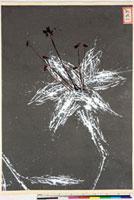 友禅図案(夏模様随意友禅図案集より) 20046004196| 写真素材・ストックフォト・画像・イラスト素材|アマナイメージズ