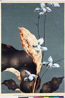 友禅図案(夏模様随意友禅図案集より) 20046004198| 写真素材・ストックフォト・画像・イラスト素材|アマナイメージズ