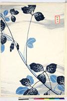 友禅図案(夏模様随意友禅図案集より) 20046004219| 写真素材・ストックフォト・画像・イラスト素材|アマナイメージズ