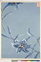 友禅図案(夏模様随意友禅図案集より) 20046004258| 写真素材・ストックフォト・画像・イラスト素材|アマナイメージズ