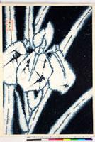 友禅図案(夏模様随意友禅図案集より) 20046004265| 写真素材・ストックフォト・画像・イラスト素材|アマナイメージズ