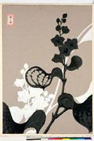 友禅図案(夏模様随意友禅図案集より) 20046004295| 写真素材・ストックフォト・画像・イラスト素材|アマナイメージズ