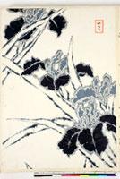 友禅図案(夏模様随意友禅図案集より) 20046004298| 写真素材・ストックフォト・画像・イラスト素材|アマナイメージズ