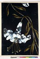 友禅図案(夏模様随意友禅図案集より) 20046004326| 写真素材・ストックフォト・画像・イラスト素材|アマナイメージズ