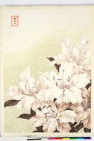 友禅図案(夏模様随意友禅図案集より) 20046004339| 写真素材・ストックフォト・画像・イラスト素材|アマナイメージズ