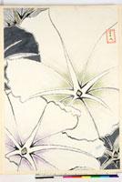 友禅図案(夏模様随意友禅図案集より) 20046004371| 写真素材・ストックフォト・画像・イラスト素材|アマナイメージズ