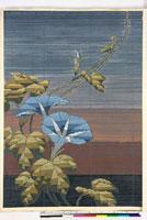友禅図案(夏模様随意友禅図案集より) 20046004378| 写真素材・ストックフォト・画像・イラスト素材|アマナイメージズ