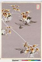 友禅図案(夏模様随意友禅図案集より) 20046004404| 写真素材・ストックフォト・画像・イラスト素材|アマナイメージズ