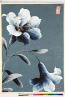 友禅図案(夏模様随意友禅図案集より) 20046004426| 写真素材・ストックフォト・画像・イラスト素材|アマナイメージズ