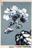 友禅図案(夏模様随意友禅図案集より) 20046004428| 写真素材・ストックフォト・画像・イラスト素材|アマナイメージズ
