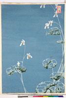 友禅図案(夏模様随意友禅図案集より) 20046004435| 写真素材・ストックフォト・画像・イラスト素材|アマナイメージズ