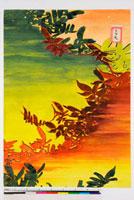 友禅図案 20046005618| 写真素材・ストックフォト・画像・イラスト素材|アマナイメージズ