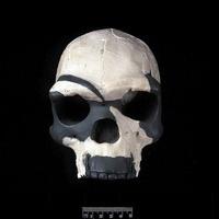Archaic Homo sapiens cranium (Laetoli 18) 20047001050  写真素材・ストックフォト・画像・イラスト素材 アマナイメージズ