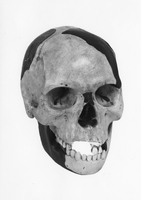 Model Reconstructions of the Piltdown Skull 20047001074  写真素材・ストックフォト・画像・イラスト素材 アマナイメージズ
