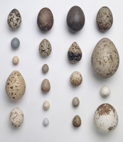 A collection of 20 birds'eggs