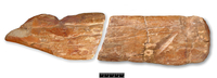 象の骨で作った祭祀用具 ピルトダウンで発掘