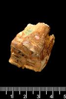ウマ属の上顎臼歯 ピルトダウンで発掘 20047001764  写真素材・ストックフォト・画像・イラスト素材 アマナイメージズ