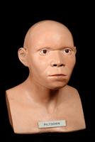 ピルトダウン人の復元標本 20047001777  写真素材・ストックフォト・画像・イラスト素材 アマナイメージズ