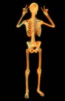 Skeletal Hand-89 20049000899| 写真素材・ストックフォト・画像・イラスト素材|アマナイメージズ
